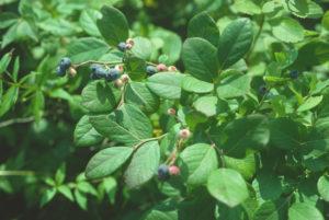 nutricion-de las plantas-tratamientos