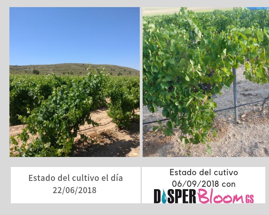 Tratamiento-cuaje-floracion-viña