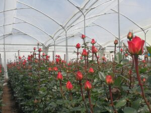 fotosintesis y desarrollo vegetativo